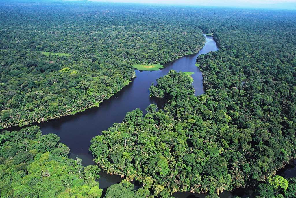 Tortuguero river delta and rainforest